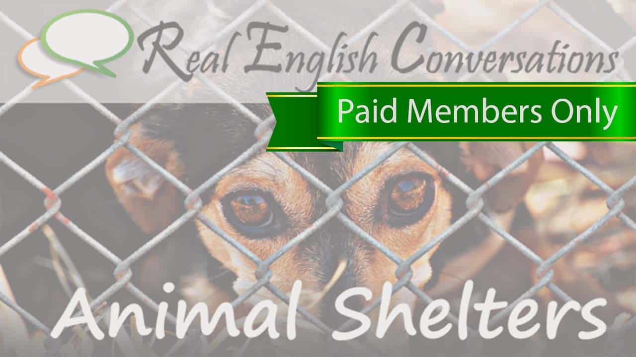 English Conversations About Animal Shelters